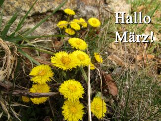 März Blüten in Görlitz