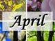 April Blüten