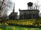 Narzissen Heiliges Grab Görlitz