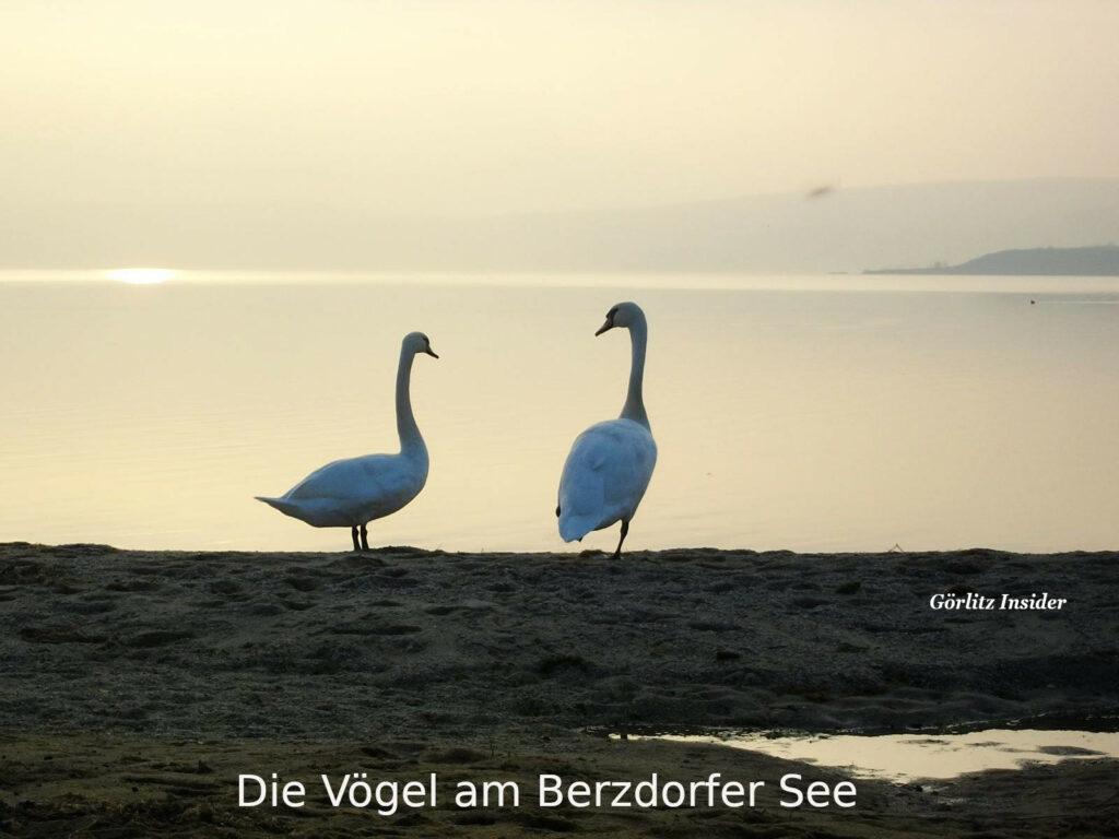 Vögel am Berzdorfer See