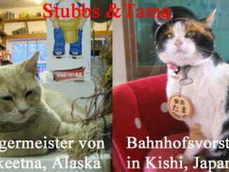 Stubbs und Tama Katzen