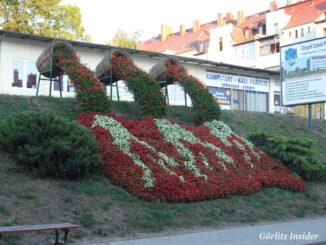 Blumenhang Zgorzelec