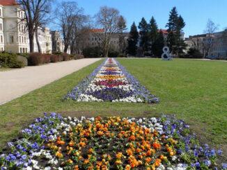 Fruehjahrsbepflanzung-Wilhelmsplatz-2018