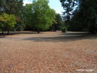 Grosse-Wiese-Stadtpark-Görlitz-August-2018