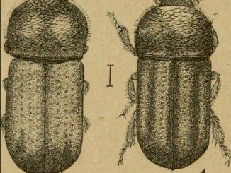 Borkenkaefer