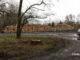 gefällte-Bäume-Volksbad-Görlitz