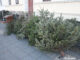 weihnachtsbaum entsorgung januar goerlitz