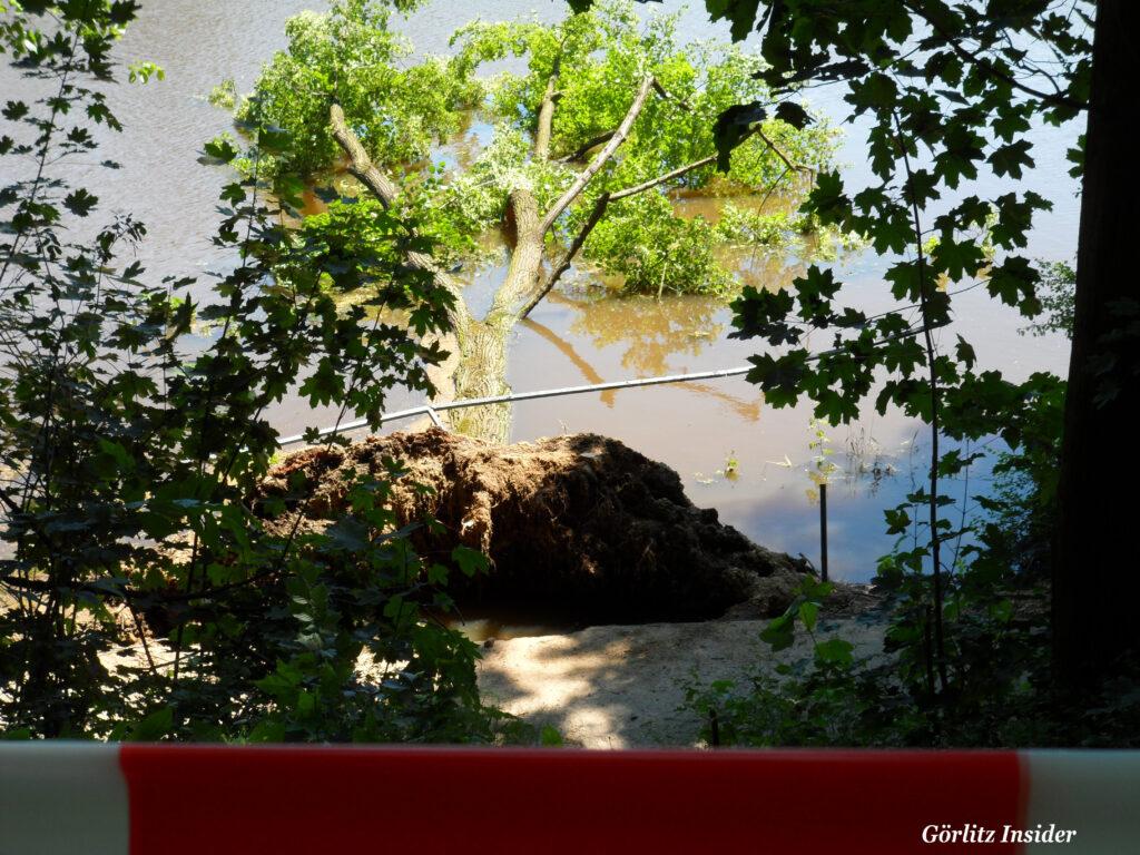 Hochwasser-22.6.2020-Görlitz-Stufe-1